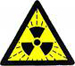 Assessing risk at low doses of ionizing radiation-the value of nuclear workers cohorts